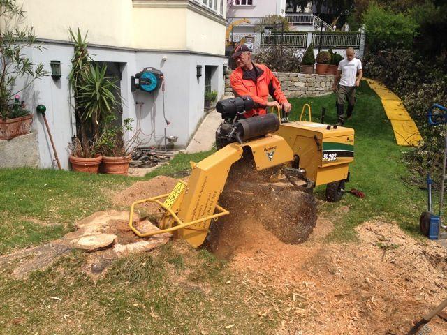 Baumstumpfentfernung